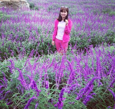 Salvia tại thung lũng hoa Bắc Hà