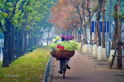Kim Mã mùa thay lá