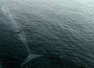 Những bức ảnh khiến bạn không dám đặt chân xuống nước