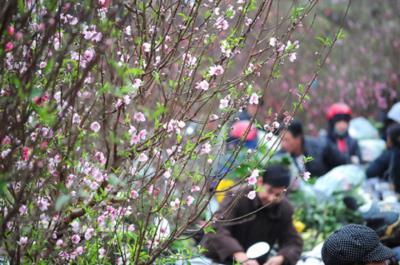 Những mùa hoa Hà Nội