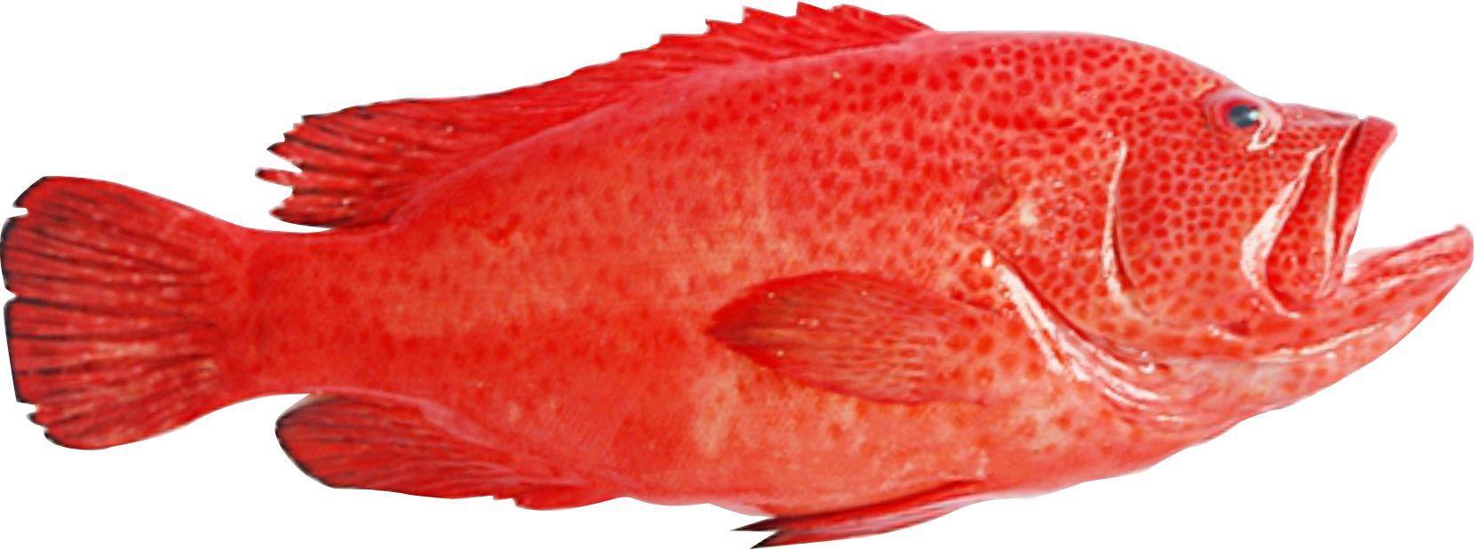 Top 4 hải sản quý hiếm cực kỳ thơm ngon bổ dưỡng