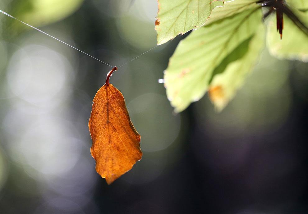 Những bức ảnh tuyệt đẹp về mùa thu khắp nơi trên thế giới