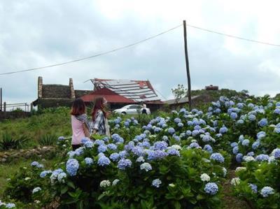 Mẫu Sơn - mùa hoa Cẩm Tú Cầu