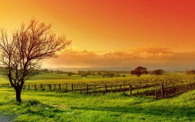 Hình nền chủ đề mùa thu cho những người yêu thiên nhiên