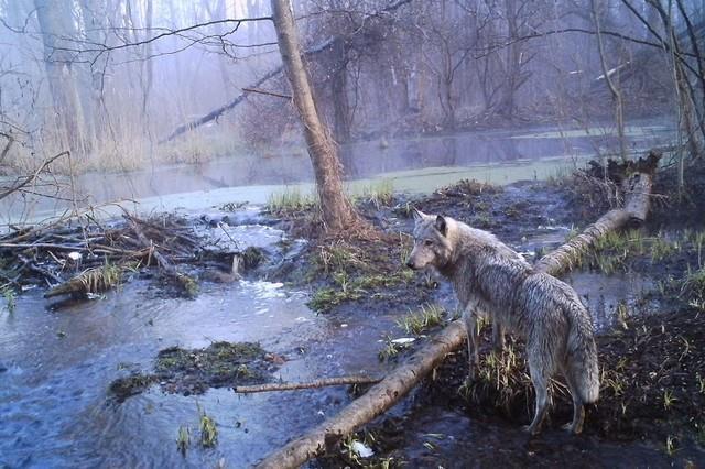 Sự hồi sinh từ tử địa phóng xạ Chernobyl