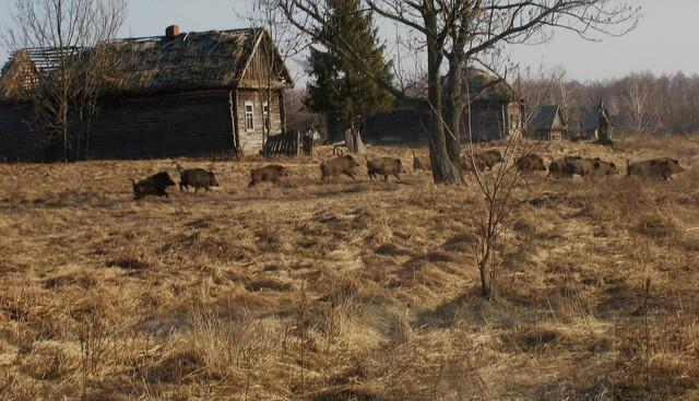 Tu dia phong xa Chernobyl da thuc su hoi sinh