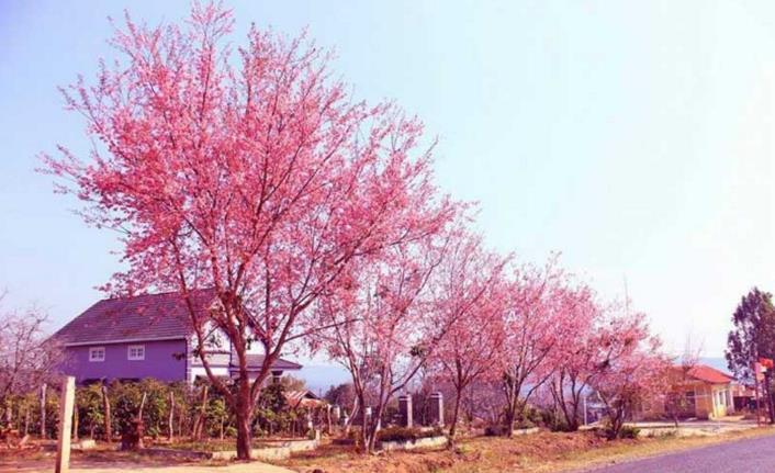 Nét khác biệt giữa mùa xuân hai miền Nam – Bắc