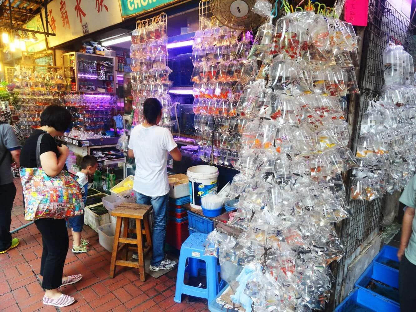 Chợ bán cá cảnh sầm uất nhất Hong Kong