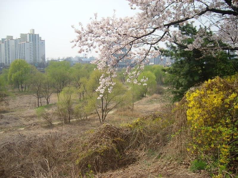 nghỉ một ngày cuối tuần,rừng seoul là điểm lý tưởng cho anh em sống tại seoul