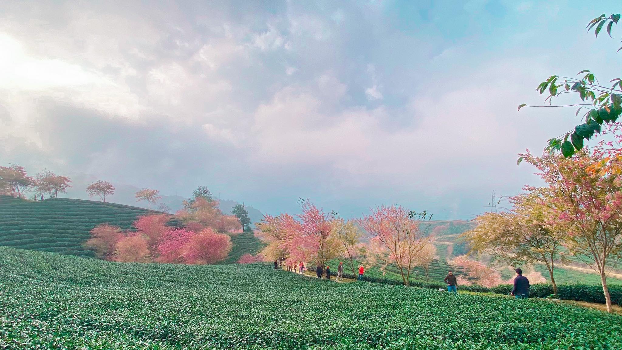 [Photo] Sapa in November 2020