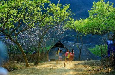 Mùa bình yên ở cao nguyên Mộc Châu