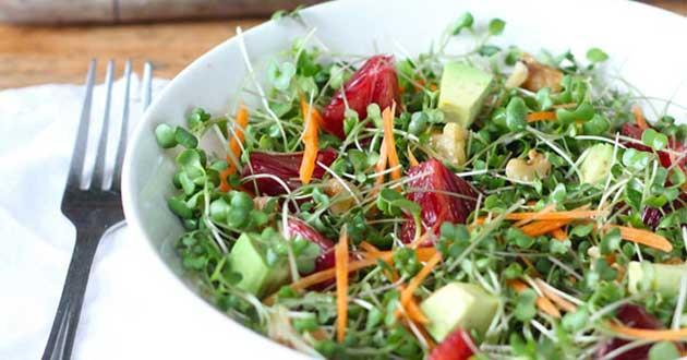 Tổng hợp hướng dẫn làm các món ăn từ rau mầm